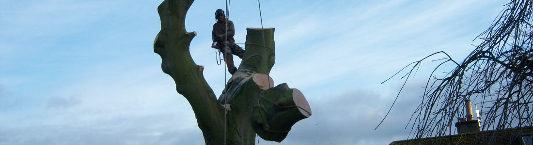 K&S Treecare