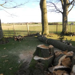 Storm damage - fence safe, plus some firewood!