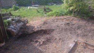 Stump completely removed to ground level
